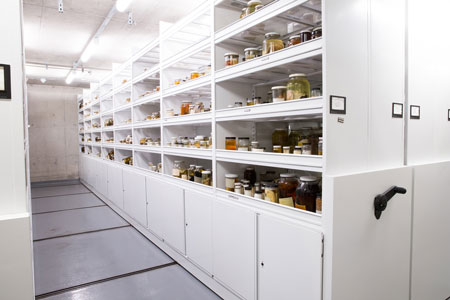 White Clean Pantry Shelving